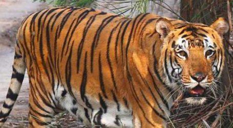 All India Tiger estimation 2018 begins