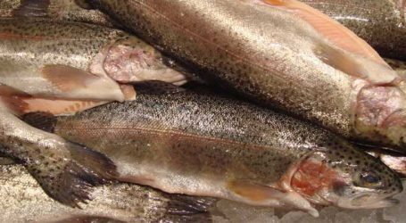 Agri Ministry launches Kits for detection of toxic adulteration in fish