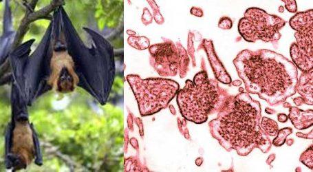 Nipah virus: Nadda sends central team to Kerala