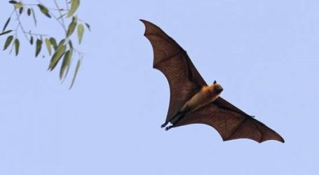 Nipah claims 3 more lives in Kerala, toll climbed to 17